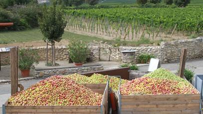 Groebe Äpfel